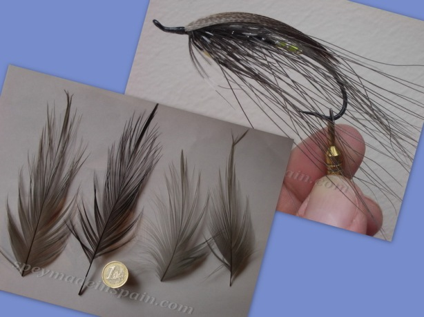 Heron feathers y Grey Heron_r