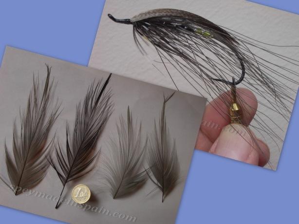 Heron feathers y Grey Heron_r